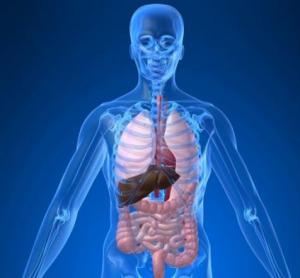 Cara Hilangkan Racun di Tubuh agar Terhindar dari Penyakit Mematikan ...